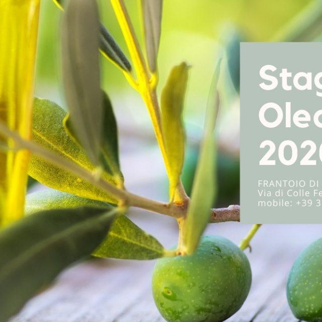 Stagione Olearia 2020